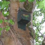 Bat Boxes by Benbulben Scouts